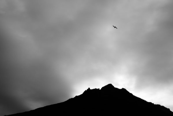 A black and white photo of a bird soaring in the sky over a mountain.